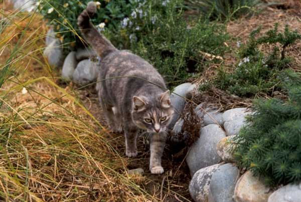 Methods on How to Keep Cats from Pooping in Yard