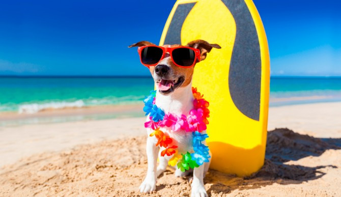 Dog Friendly Beaches in Florida Panhandle for Happy Holiday of Pet Owners