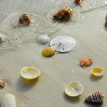 Best Seashell Beaches in Florida to Find Varieties of Beautiful Seashells