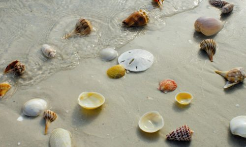 Best Seashell Beaches in Florida to Find Varieties of Beautiful Seashells