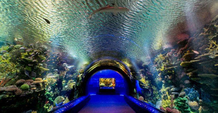 Coney Island Aquarium Prices for Different Ages in New York